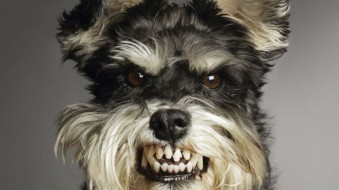 dog-baring-teeth-1024x576.jpg
